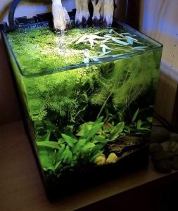 fish-tank-with-no-water