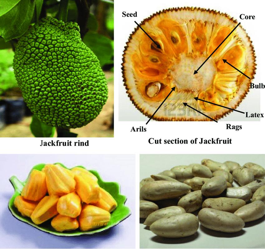 Parts of a Jackfruit