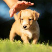 rescue-dog-1024x831